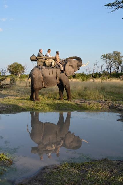 Elephant, olifant, Botswana, geredde olifant, Okavango Delta, Afrika, Afrikaanse olifant, African elephant, Randall Moore, passion for elephants