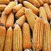 Programa Troca-Troca antecipa entrega de sementes a mais de 9,6 mil agricultores