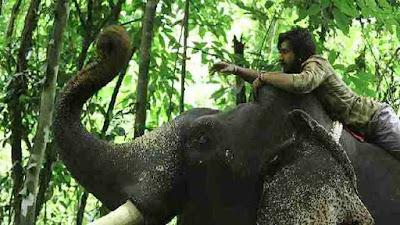 Kaadan Full Movie Download HD 48p, 720p available on isaimini, Tamilrockers, Moviesda and Tamilyogi