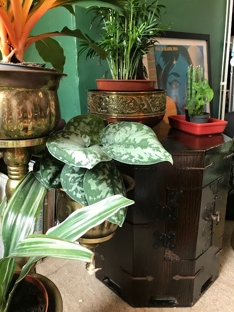 A collection of houseplants in brass pots, and an octagonal wooden cabinet.