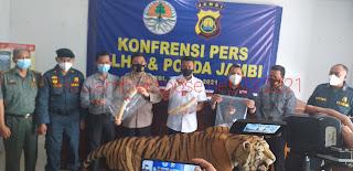 Tim gabungan Berhasil Mengamankan Tiga Orang Pelaku Penjual Opsetan Harimau Dan Gading Gajah