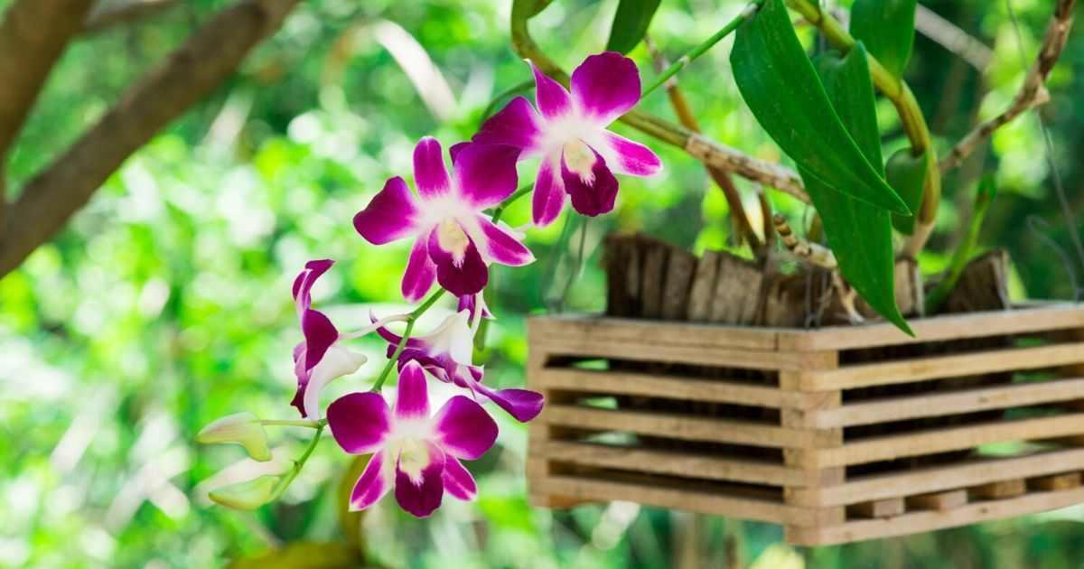 Bunga orkid yang cantik