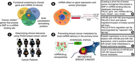 cancer Gene therapy breast