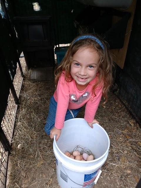 Savanna Bucket of eggs