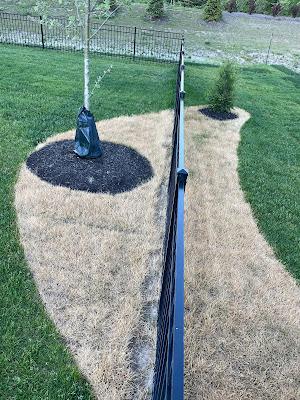 Shape of new mulch bed in dead grass