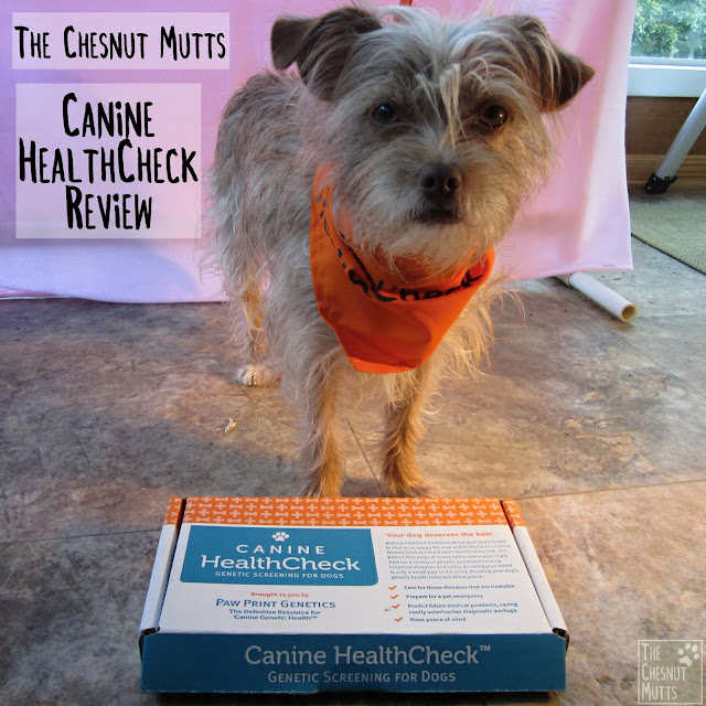 The Chesnut Mutts Canine HealthCheck Review