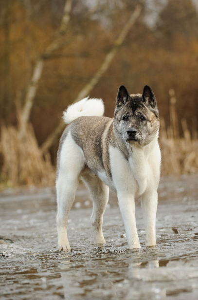 Dogs, Dog Breeds, Puppies,