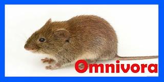 Pengertian Omnivora, Herbivora Dan Karnivora Lengkap