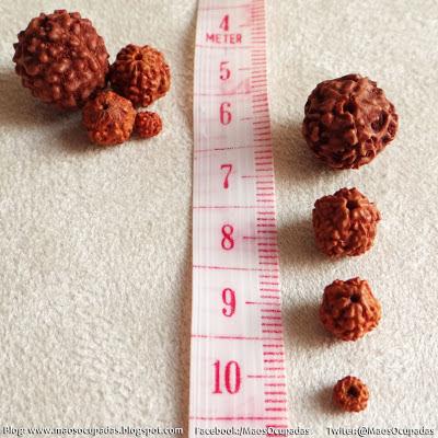 sementes de rudraksha mãos ocupadas