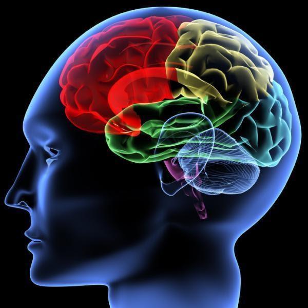Psikologi Kognitif Apa Itu Kognitif