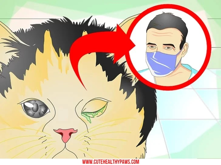 How to treat cat eye infection
