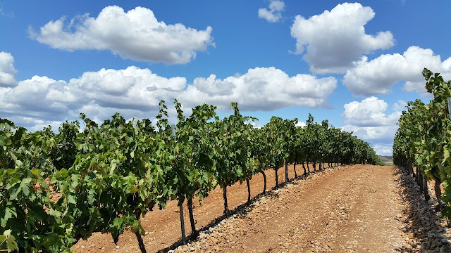 Winnice rioja