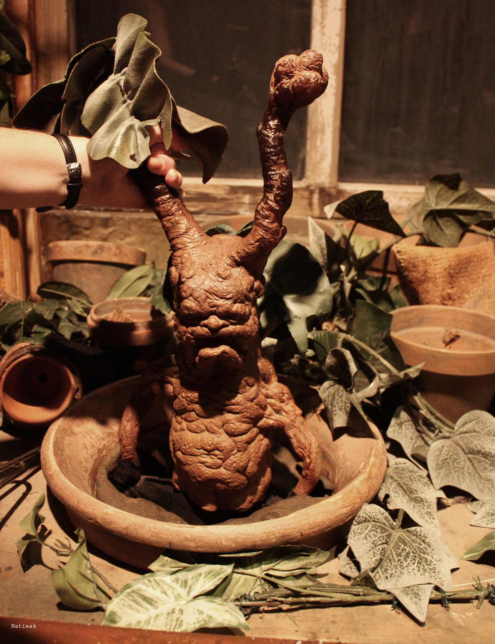 mandragores exposition Harry Potter
