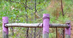 purple no trespassing no hunting paint