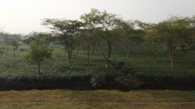 Kazi and Kazi Tea Estate Limited