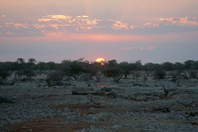 Namibia, Etosha National Park, sunrise, safari