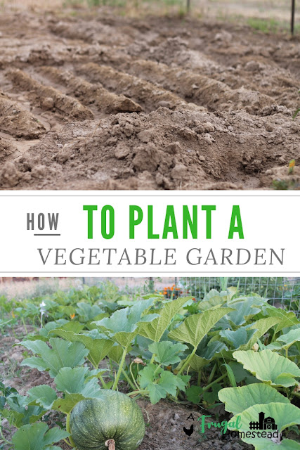 Easy steps to help you learn how to plant a garden successfully.