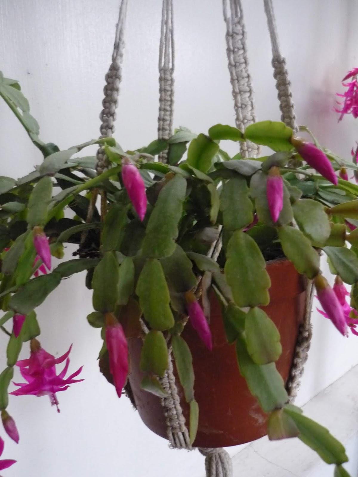 Cactus al crochet tejiendo Perú patron - Imagui | 1600x1200
