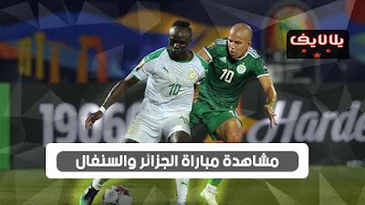 مشاهدة مباراة الجزائر والسنغال