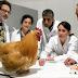 Encuentra la respuesta a qué fue primero, ¿el huevo o la gallina?