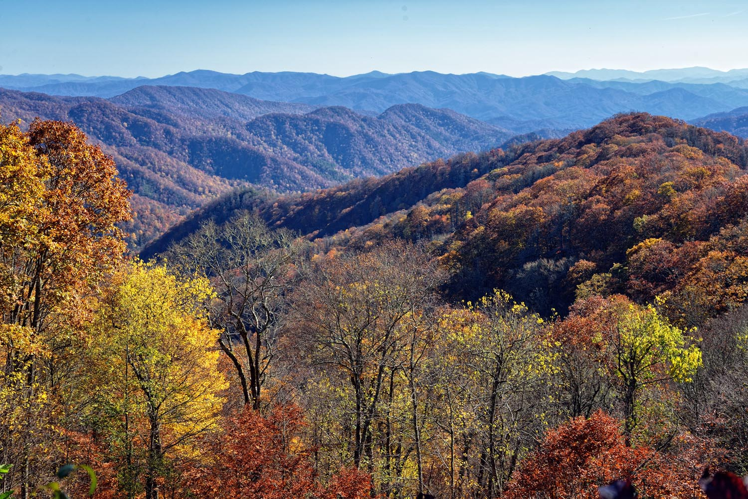 Autumn Colors The Amazing Life Great Smoky Mountains National Park