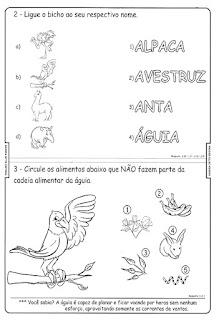 Bichonário águia