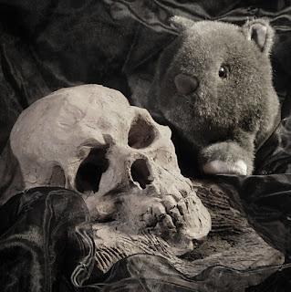 Shane Wombat....Vanitas