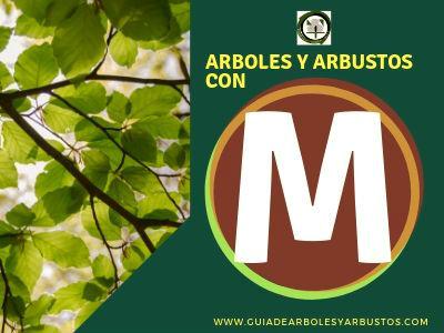 Arboles y arbustos que empiezan por la letra M