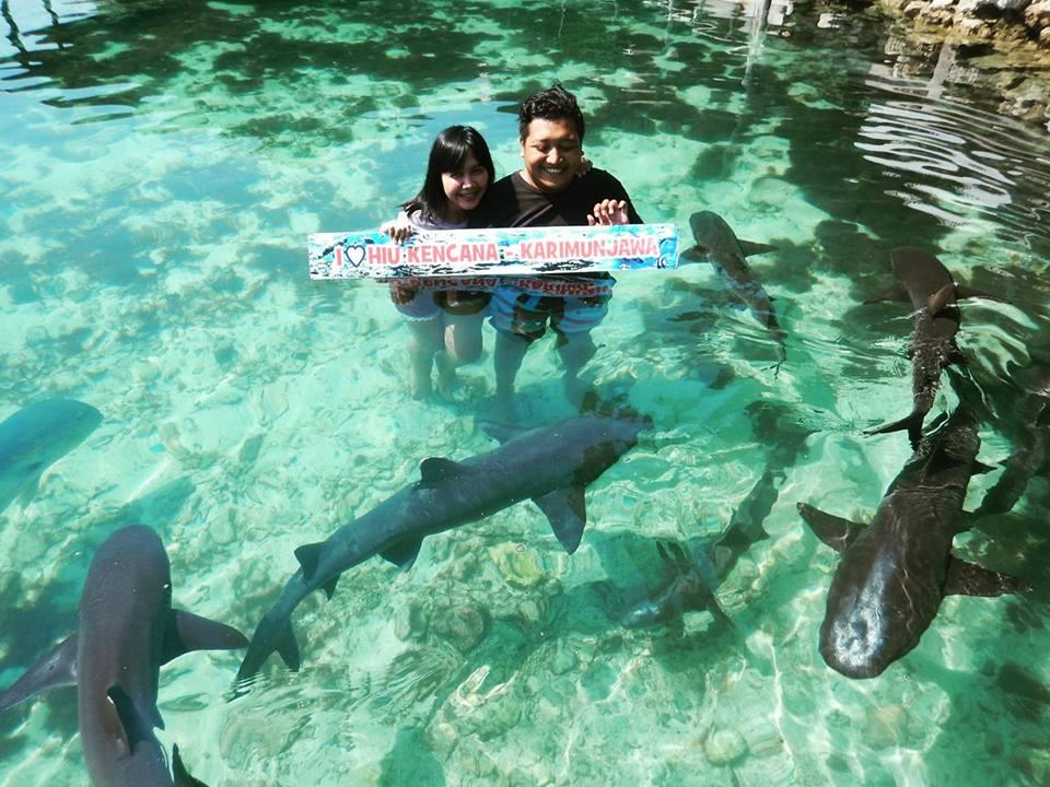 Tips Aman Di Penangkaran Hiu Karimunjawa Open Trip Travel Paket