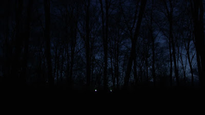 Night Woods