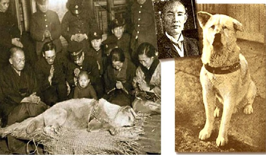 Hachiko, Dog, Japanese