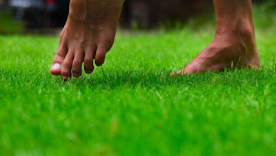 Will not walk Barefoot in Grass