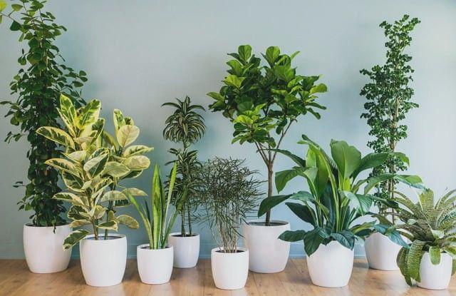 memasang tanaman hijau