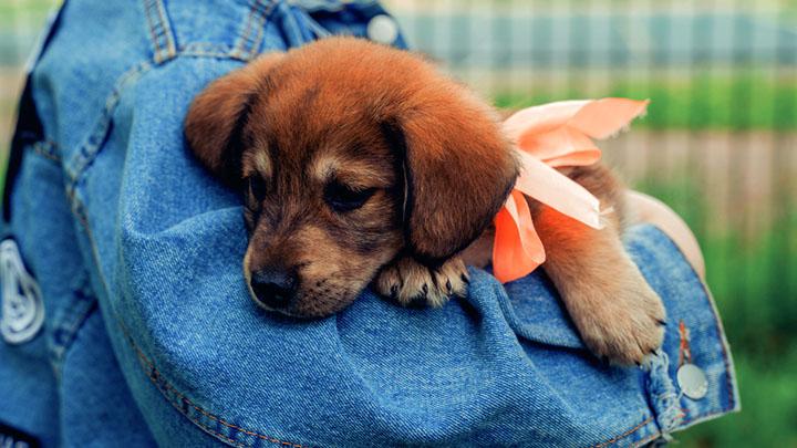 puppies-leash-training