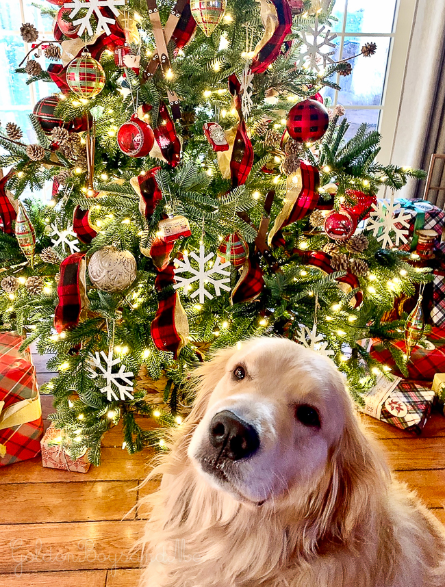 Golden Retriever in front of Balsam Hill Christmas tree - www.goldenboysandme.com