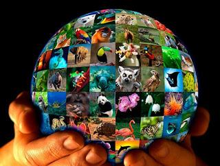 Inician charlas sobre ecología y poblaciones animales