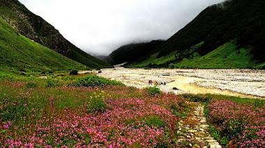 Plantas alpinas en el Valle de las Flores en India