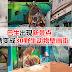 巴生出现新景点,后巷变成3D野生动物壁画街!