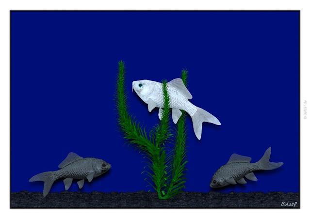 blauäugiger weißer Fisch