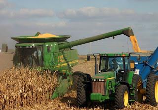 colheita do milho