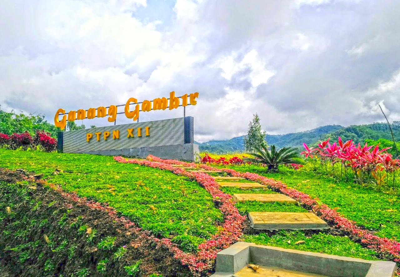 kebun teh gunung gambir