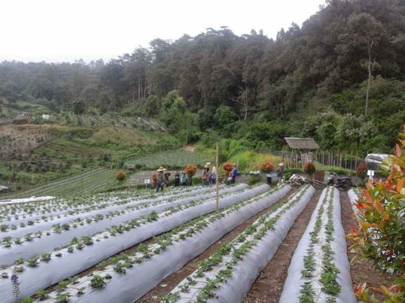 Kebun Raya Tongkoh