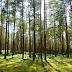 """Para """"restaurar a criação"""", igreja Presbiteriana plantará 1.500 árvores"""