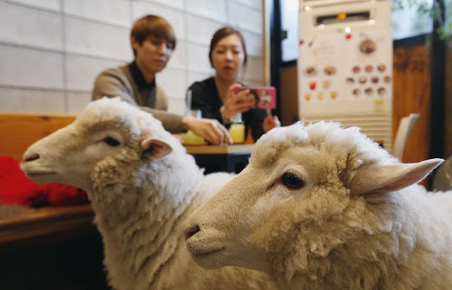 Makan Sambil Bermain Dengan Hewan Peliharaan di Cafe Korea