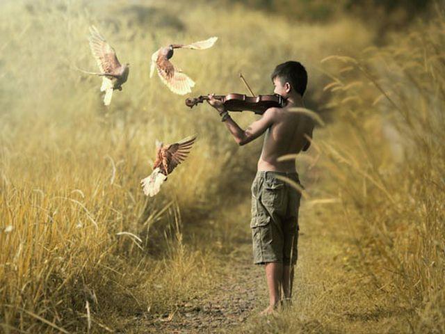 Keman kuş aşk güvercin çocuk