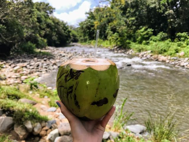 El Yunque Coconut - ATV Tour - Puerto Rico