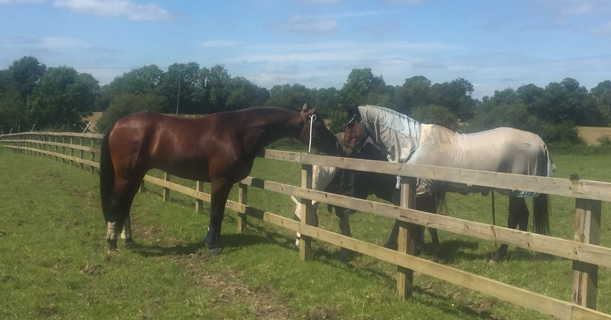 Hunting for my (dressage) Horse: A teeny tiny competition to test the waters