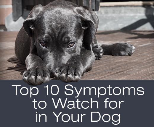 Top 10 Symptoms to Watch for in Your Dog