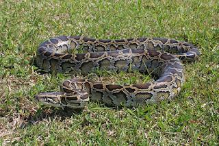 arti mimpi dikejar ular besar