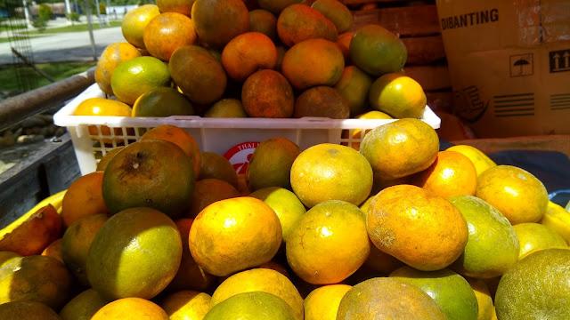 jeruk gerga bengkulu